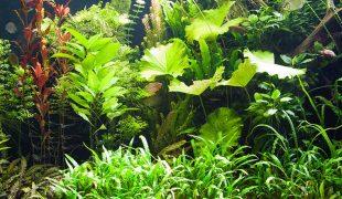 Pflanzenlandschaften im Aquarium