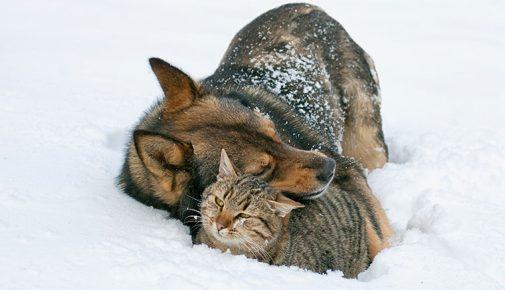 Winterpflege Hund und Katze