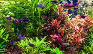 Neues Aquarium