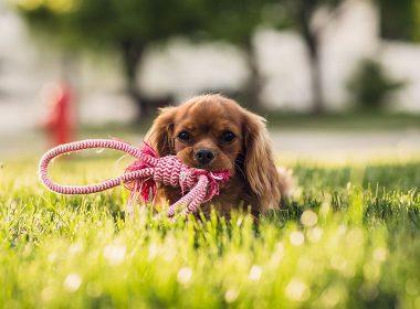 Beschäftigung für den Hund selber machen
