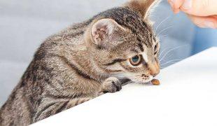 Katzenleckerchen