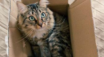 Umzug mit Katze