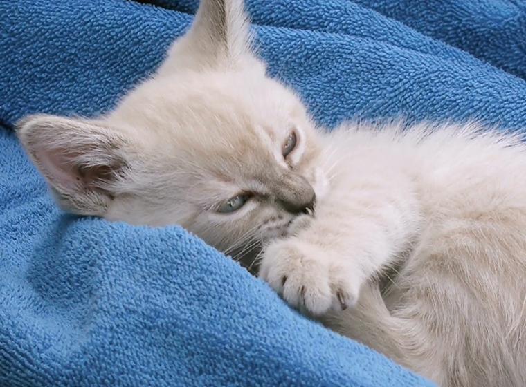 Katze Narkose Wie Lange Nachwirkungen