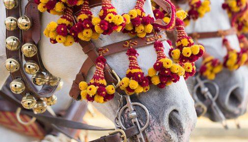 Pferde im Karneval: das bedeutet die fünfte Jahreszeit für Vierbeiner