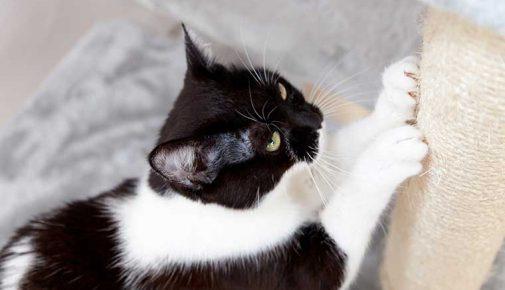 Wenn Katzen kratzen