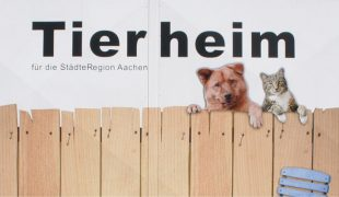 Tierheim-Alltag