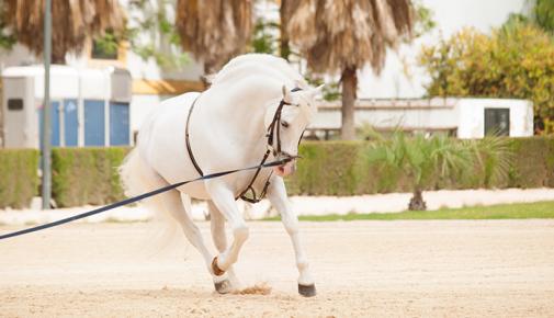 Pferde richtig longieren