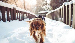 Pfotenpflege im Winter