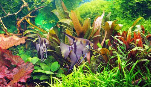 aquaristik magazin themen rund um 39 s aquarium zooroyal magazin. Black Bedroom Furniture Sets. Home Design Ideas