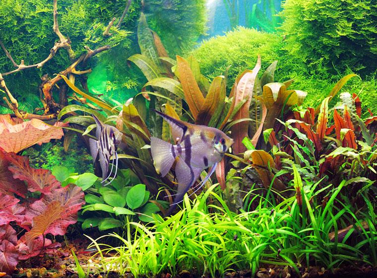 aquarium einrichten tipps f r den aquaristik neuling. Black Bedroom Furniture Sets. Home Design Ideas
