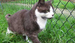 Tierheim Detmold Katze Nelly