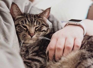 Bindung zur Katze aufbauen