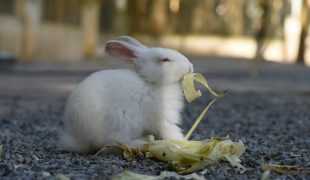Kaninchen Haltung
