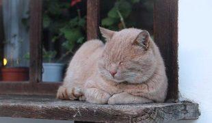 Katze im Alter