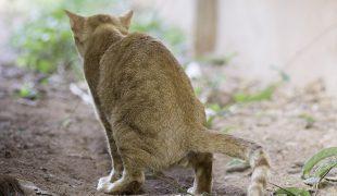 Harnwegserkrankungen Katze