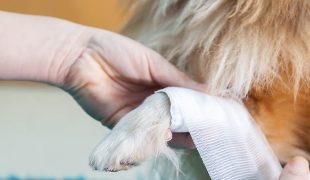 Erste Hilfe bei Hunde-Unfällen