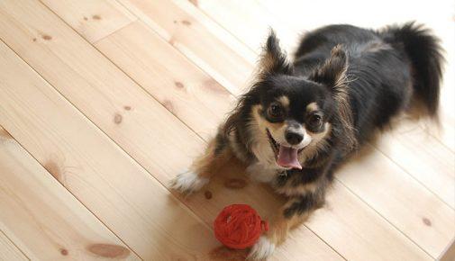 Spielideen für Hunde