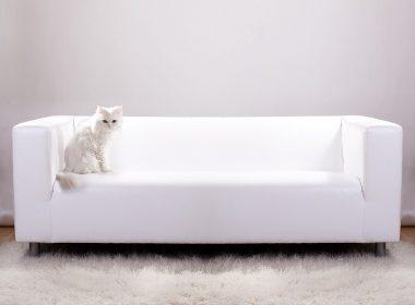 Stilvoll wohnen mit Katze: moderne Katzenmöbel