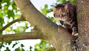 Wurmkur bei der Katze