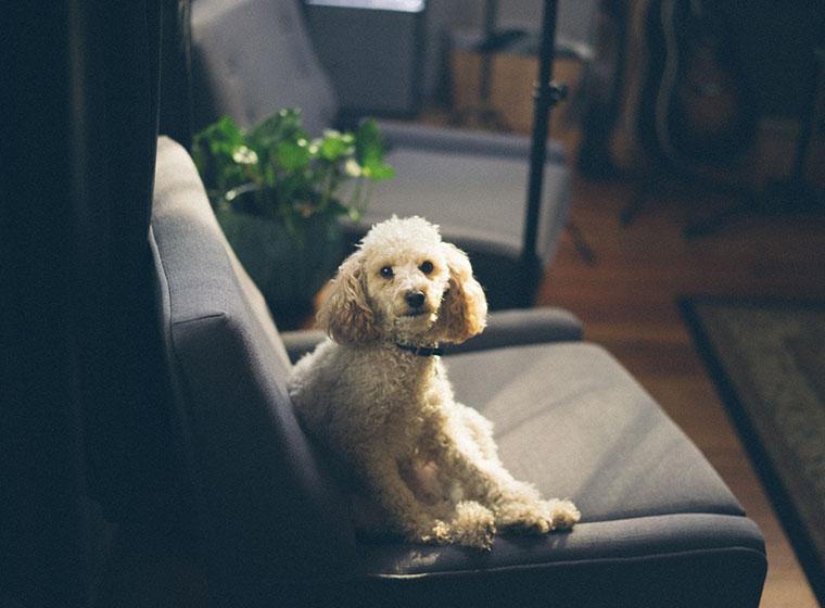 stilvoll wohnen mit hund 5 tipps zooroyal magazin. Black Bedroom Furniture Sets. Home Design Ideas