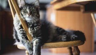 Katze eingewöhnen
