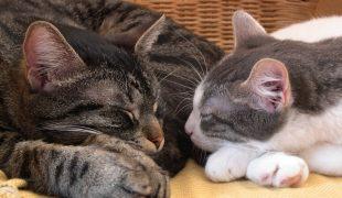 Katzen zusammen halten