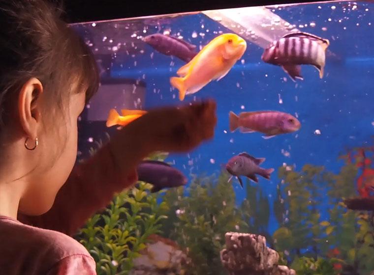 aquarium fur kinder