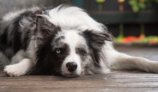 Hunde senken das Todesrisiko