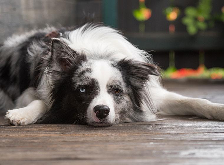 studien ergeben hunde senken fr hzeitiges todesrisiko. Black Bedroom Furniture Sets. Home Design Ideas