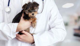 Tierarzt
