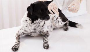 Hundeimpfungen