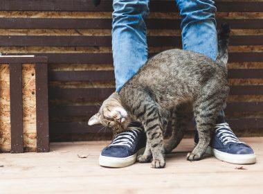 Katzenverhalten: warum macht meine Katze das?