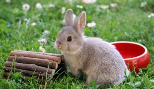 Kaninchen Beschäftigung: Spielzeug für Kaninchen