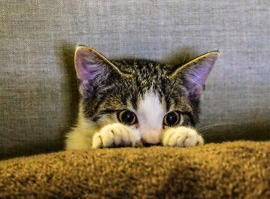 Kratzverhalten Katze