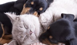 Katzenhaltung