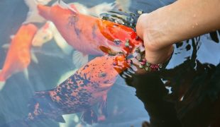 Saisonales Die Richtige Teichpflege Nach Jahreszeit