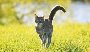 Katze Freigang