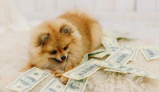 welpengeld