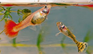 Fischfütterung