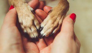 Trennungsstress und Trennungsangst bei Hunden