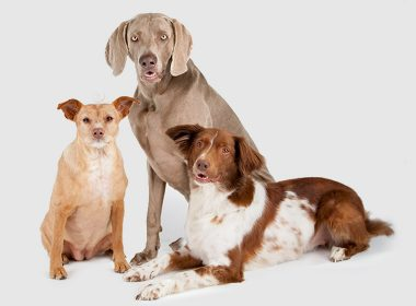 ZooRoyal-Bürohunde