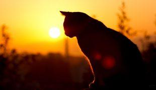 Katze im Sonnenuntergang