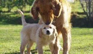 Hundemama kümmert sich liebevoll um Welpen. Später hält artgerechtes Hundefutter sie groß und stark