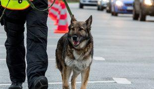 Polizeihund mit Führer