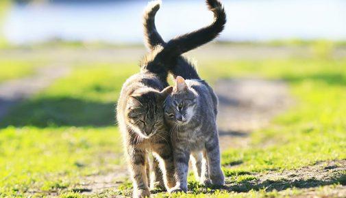 Katzen zusammenführen