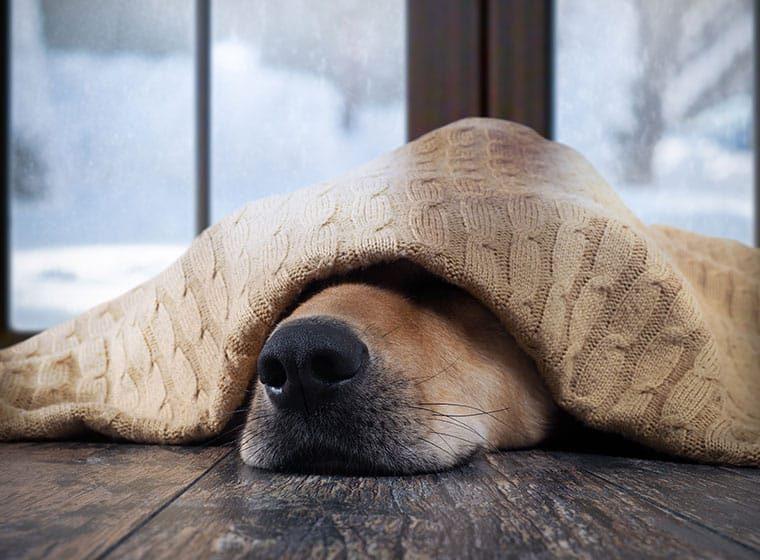 winterdepression beim Hund