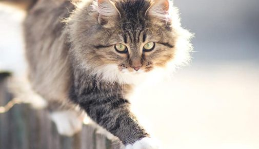 Verhaltensanalyse Katzen