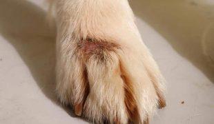 Hot Spot Hund
