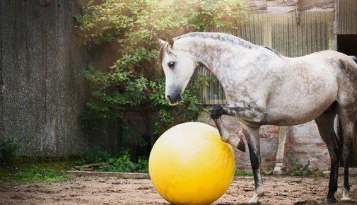 Clickertraining Pferd