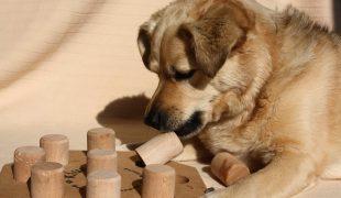 Indoor-Spiele für Hunde